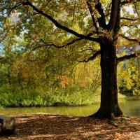Осенний пейзаж :: Elen Dol