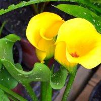 «Жёлтые цветы» :: Александр NIK-UZ