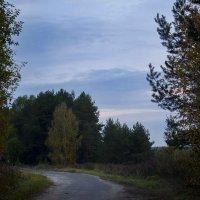 Берёза у дороги 2 :: Руслан Веселов