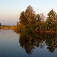 Утро на болоте. :: Владимир Фисенко