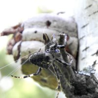 Крепко крепим паутинку. :: nadyasilyuk Вознюк