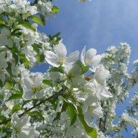 Весна :: LaDy Dи