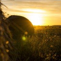 Рассвет в поле :: Денис Пшеничный
