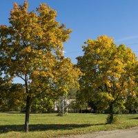 Осень в городе :: Veyla Vulpes