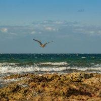 Я не нагляжусь на море... :: Александр Пушкарёв