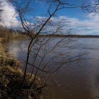 Весна идёт! :: Борис Кононов