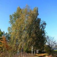 Осень :: Наталья Neg26f Г