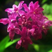 Орхидеички :: Alexander Andronik