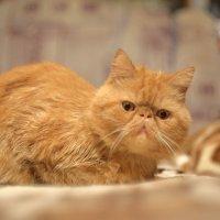 Без кота никуда ;) :: Илья