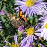 Бабочка :: arkadii