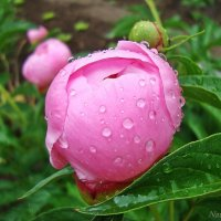 Свежесть после дождя :: Лидия (naum.lidiya)
