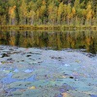 На озере. :: Наталья Цветкова