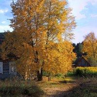 Листья золотые, падают, летят :: Павлова Татьяна Павлова