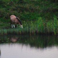 ходят кони к водопою... :: juriy luskin