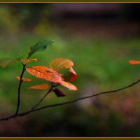 краски осени :: Дмитрий Анцыферов