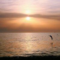Прощание с солнцем :: Iverinka .