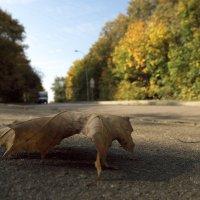 Дорога в осень :: Андрей Михайлин