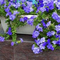 Цветы в городе...3 :: Тамара (st.tamara)
