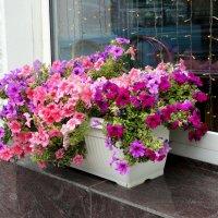 Цветы в городе...5 :: Тамара (st.tamara)