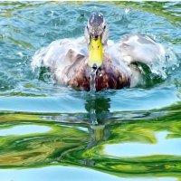 Пловец! :: Наталья