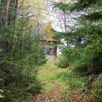 Домик в лесу. :: petyxov петухов