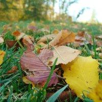 Осень :: °•●Елена●•° Аникина♀