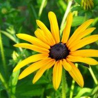 гордый абхазский цветок) :: Tiana Ros
