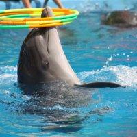 Дельфин :: Ник Macen