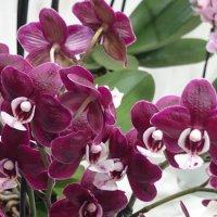 Орхидеи на выставке цветов 2015г :: Galina194701