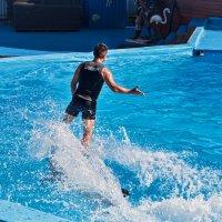 На дельфине, как на бригантине:) :: Дарья Казбанова
