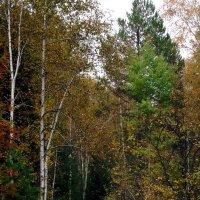 Осенний лес :: Валентин Когун