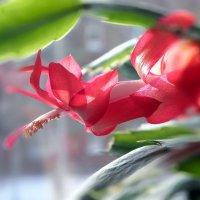 Цветы дома :: Александр Попов