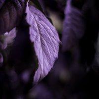 leaf :: Ростислав Крючков