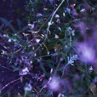 Цветики семицветики :: elena leona