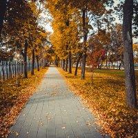 Осень.... :: Светлана