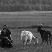 козы и старушка :: Александра