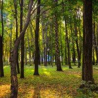 Быханов сад... :: Алексей Бортновский