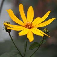 Цветы у дома :: Александр Попов