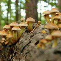 В лесу на пенёчке :: Alexander Andronik