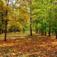 По ковру из жёлтых листьев .... :: Анатолий. Chesnavik.