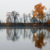 Красивая  грусть... :: Наталья Соколова