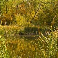 Заброшенный пруд :: Андрей