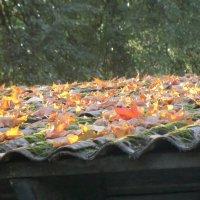 Крыша и листья... :: Владимир Павлов