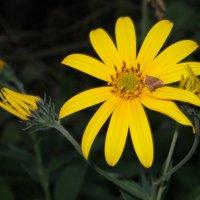 маленький цветок :: valeriy khlopunov
