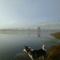 Прогулка с собакой к мостам в утреннем тумане :: Николай Туркин