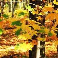 Осень :: Татьяна Овчинникова