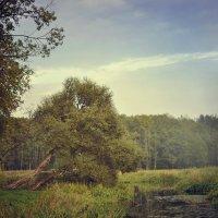 Осень пришла :: Лана Минская