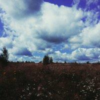 Поле и небо.Лето. :: Polli Air