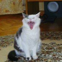 пасть- ну просто тигр!!! :: Александр Прокудин