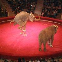 Слоны 3 :: Александр Винников